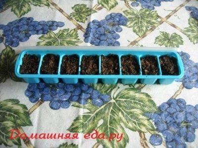 Заготовка из сухих грибов