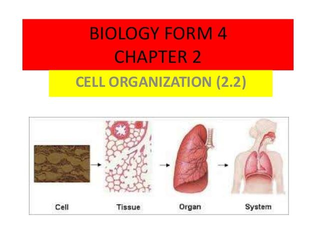 BIOLOGY FORM 4  CHAPTER 2  CELL ORGANIZATION (2.2)