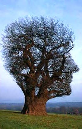 """""""Only God can make a tree"""" -- probably because it's so hard to figure out how to get the bark on. (Woody Allen)"""
