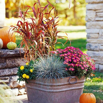 Containers for Fall!