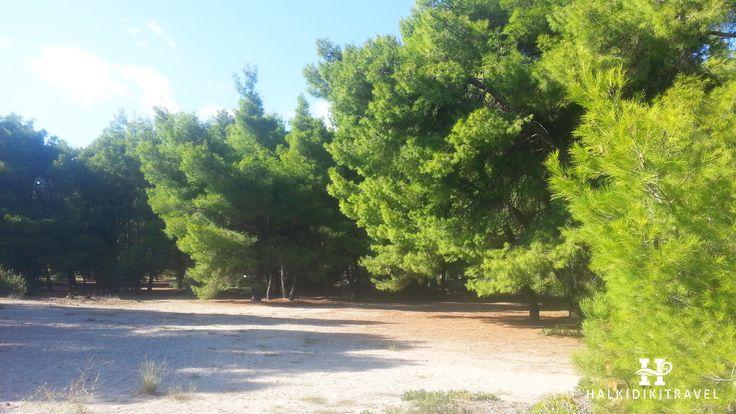 #Lagomandra #beach in #Halkidiki. More info at http://bit.ly/1uzGQma