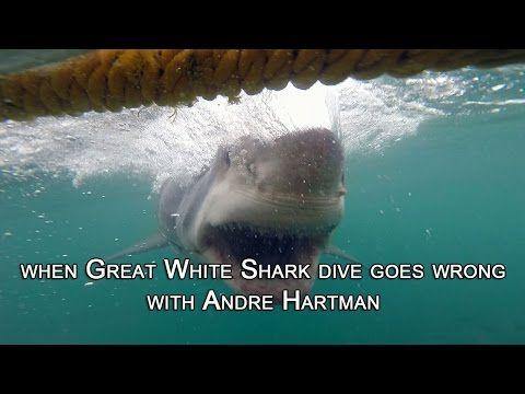 The megalodon still alive. The biggest shark ever seen - YouTube