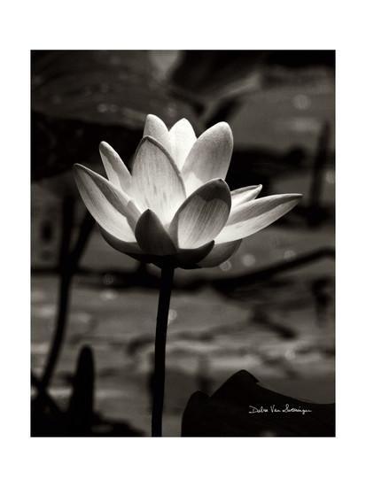 Lotus Flower VII Art Print by Debra Van Swearingen at Art.com