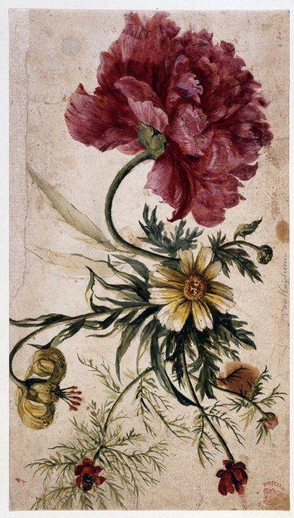 Jan van Huysum (1682-1749), Flower study via British Museum, hat tip to 970811116 Rose Briar