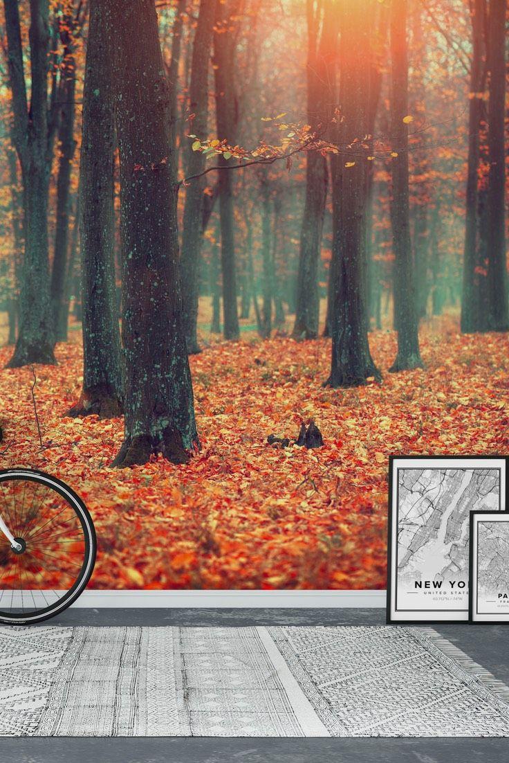90 best forest wall murals images on pinterest photo wallpaper autumn wall mural wallpaper amipublicfo Images