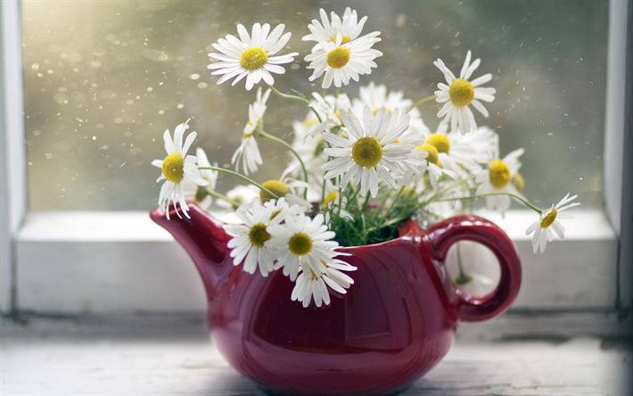 Download wallpapers chamomile, red kettle, flower decoration, spring flowers