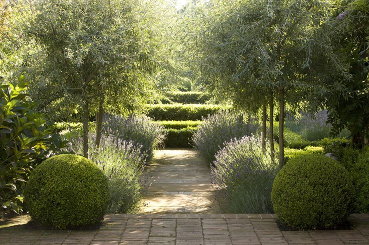 A short 'avenue' of olive trees, lavender and clipped box - a winning combination.