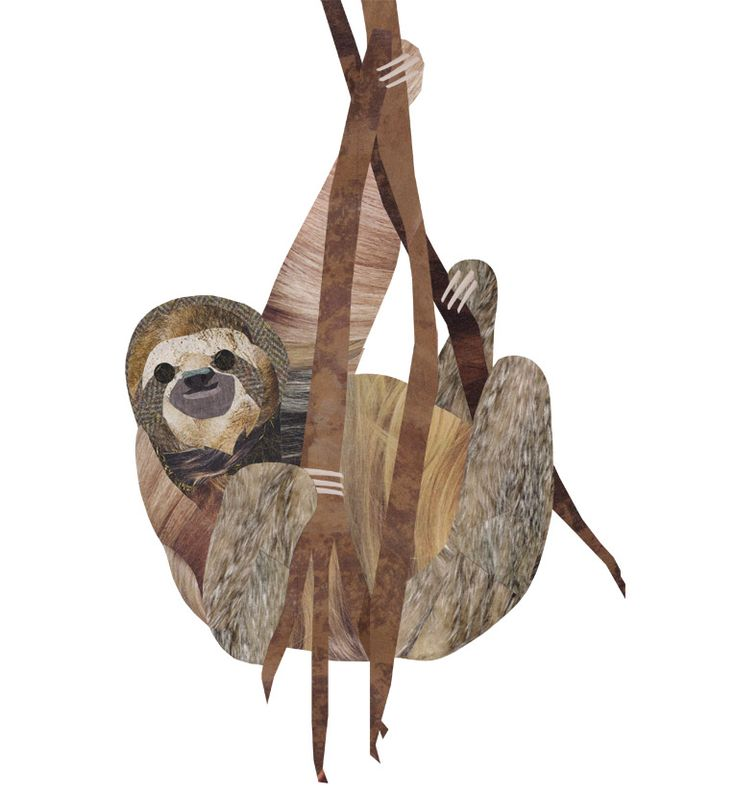 Collage Sloth illustration by wildlife illustrator ...