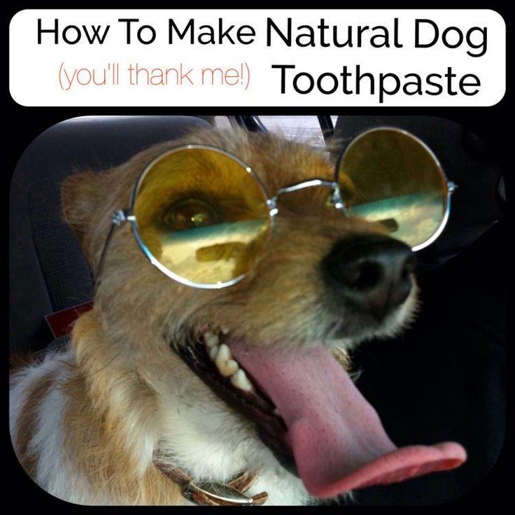 Natural Remedies To Clean Dogs Teeth