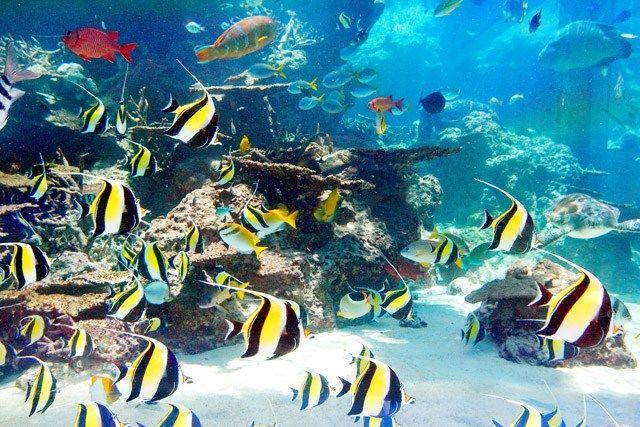 Aquarium Churaumi d'Okinawa | Le Japon d'Émilie