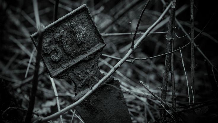 Bohnický hřbitov bláznů. Jedno z mnoha číslel hrobů schovaných v křoví.