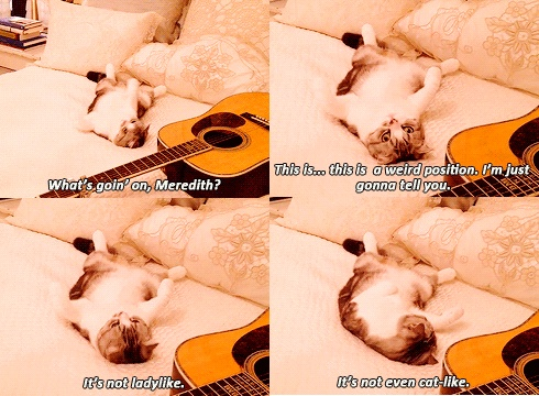 I want taylor swifts cat so bad that I can't even function