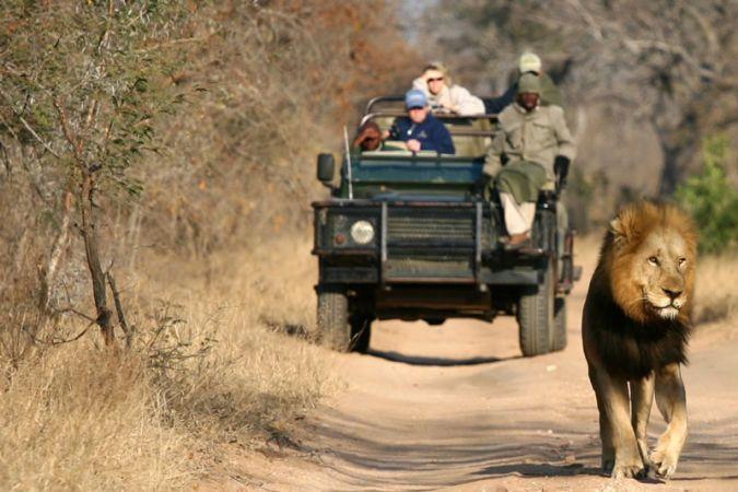 Kruger Park Morning Open Vehicle Safari