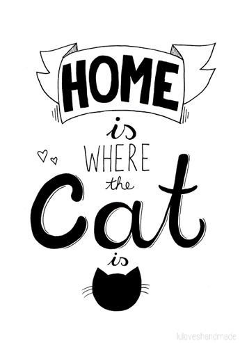 Would your home just not be the same without your cat? They do say that home is where the cat is..
