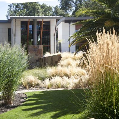 86 best images about native gardens on pinterest for Modern ornamental grasses
