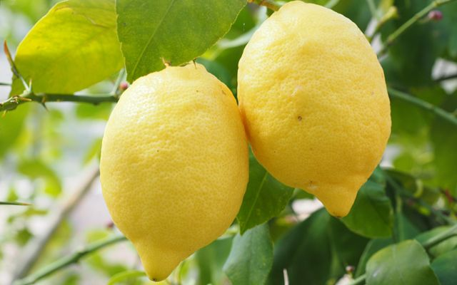 Citroenen bevatten een lijst gezonde ingrediënten waar je gelukkig van wordt. Citroenen bevatten onder meer vitamine C, citroenzuur en B-vitamines.
