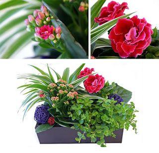http://holmsundsblommor.blogspot.se/2009/09/blommigt-i-platlada.html Gloxinia, calandiva, ampellilja, peperomia