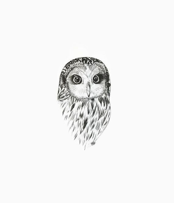 This is a print of the beautiful barred owl, which I have drawn from a photograph with ink, perfect for any room in the house or office. - Available