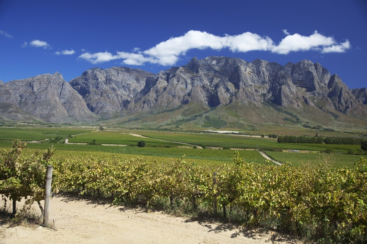 Stellenbosch is perhaps best known for it's abundance of wineries and excellent wines.