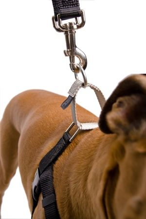 Best Harness For Dogs With Laryngeal Paralysis