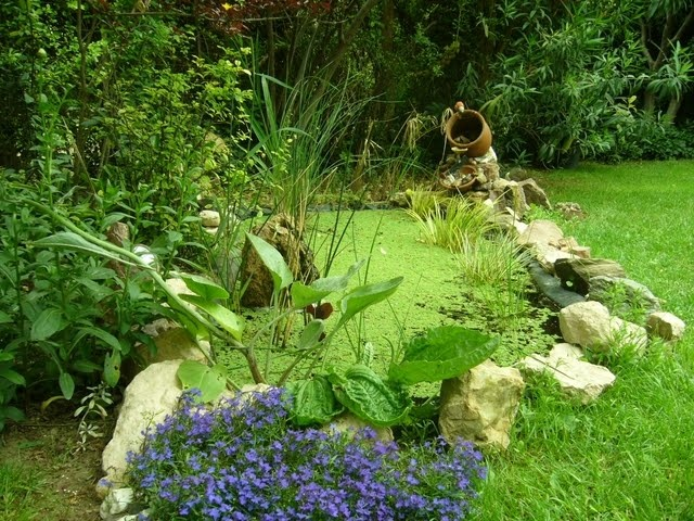 20 best images about frog pond on pinterest early for Small frog pond ideas