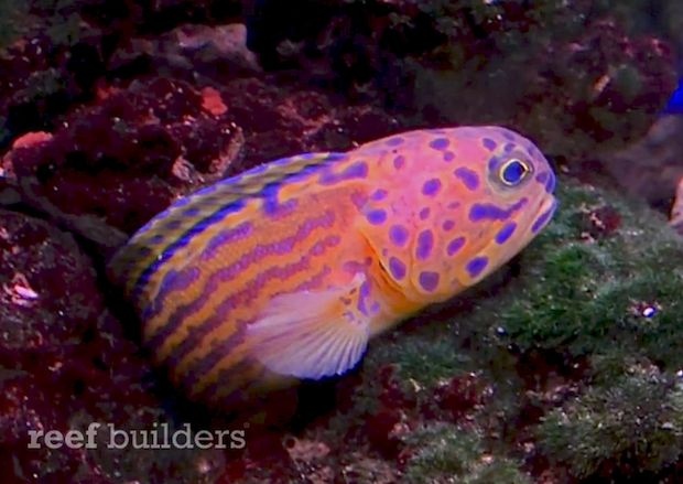 1000 images about reef safe fish on pinterest fish