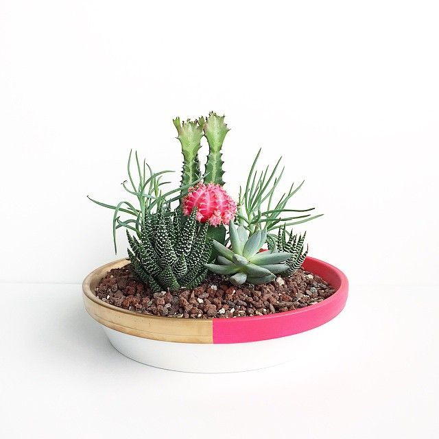 Succulent bowl by Courtney Shelton | HIBRID #succulents #cacti