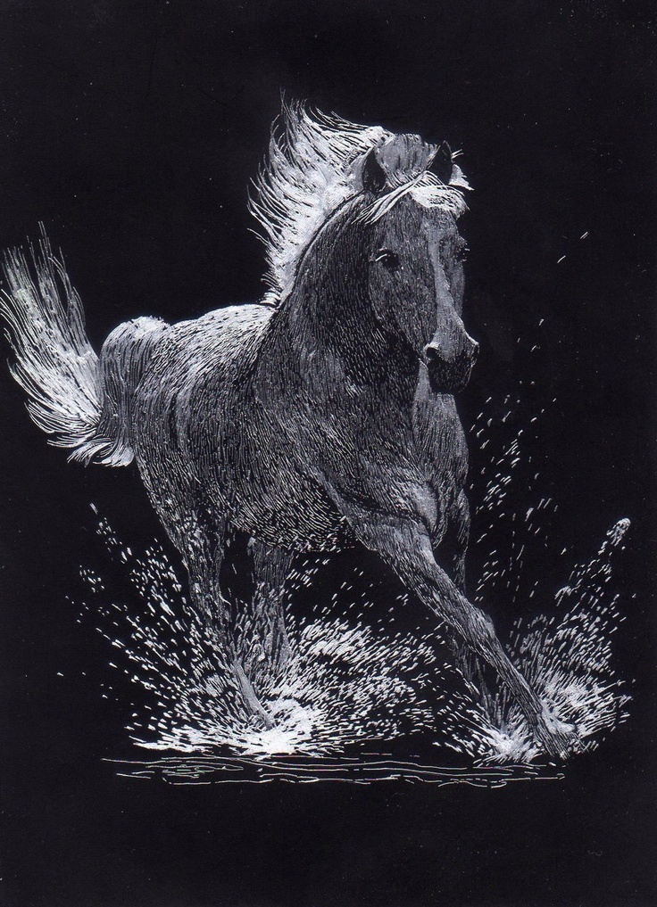 Gallery For gt Scratchboard Art Horse