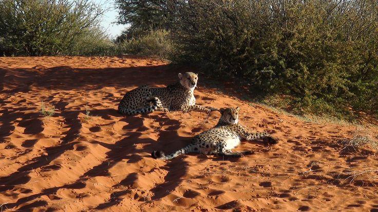 cheeta's, Namibia. Photo: Christa Fris
