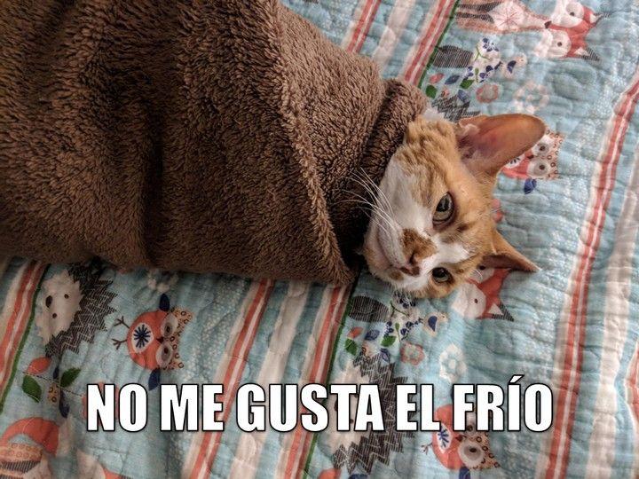 Miaucoles No Me Gusta El Frio Frio Memes De Clase Memes Espanol Graciosos