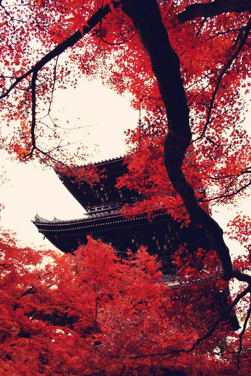 red trees Japan