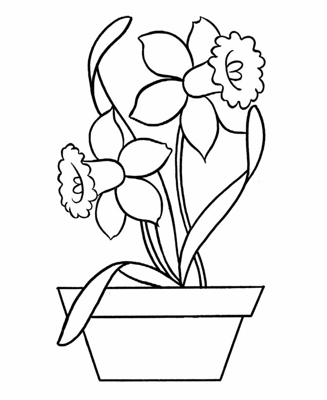 easy coloring pages free printable daffodils in pot easy - Free Easy Coloring Pages