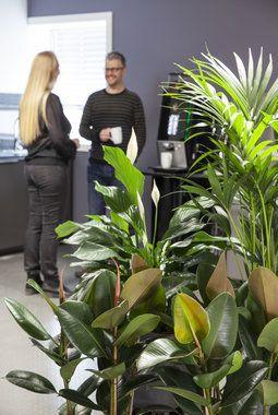 Grønne planter skaper økt trivsel på arbeidsplassen