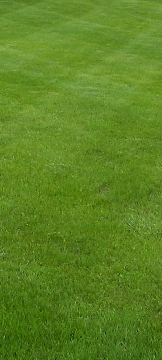 Lawn Care: Newly Seeded Lawn  |  Established Lawn  |  Newly Installed Trees