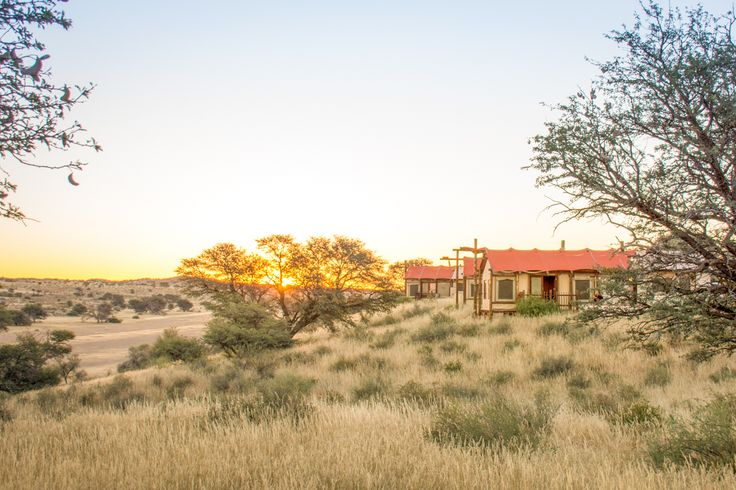 Plan your best-ever trip to the Kgalagadi