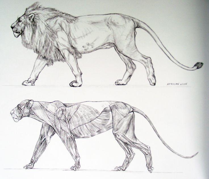 Art by Terryl Whitlatch* • Blog/Website | (https://imaginationinternationalinc.com) • Online Store | (https://imaginationinternationalinc.com/creatures-of-amalthea/store) ★ || CHARACTER DESIGN REFERENCES™ (https://www.facebook.com/CharacterDesignReferences & https://www.pinterest.com/characterdesigh) • Love Character Design? Join the #CDChallenge (link→ https://www.facebook.com/groups/CharacterDesignChallenge) Promote your art in a community of over 50.000 artists! || ★