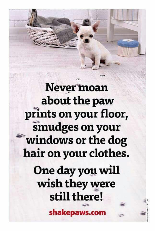 A Good Dog Never Dies Poem