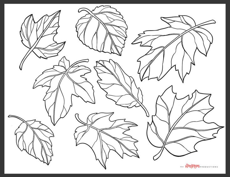 pumpkin with leaves coloring page - best 25 fall leaves drawing ideas on pinterest autumn