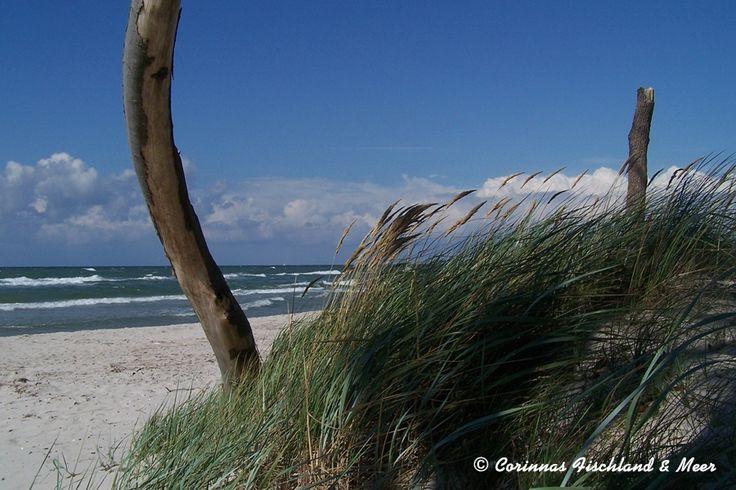 Corinnas Fischland & Meer: Strand am Darßer Ort