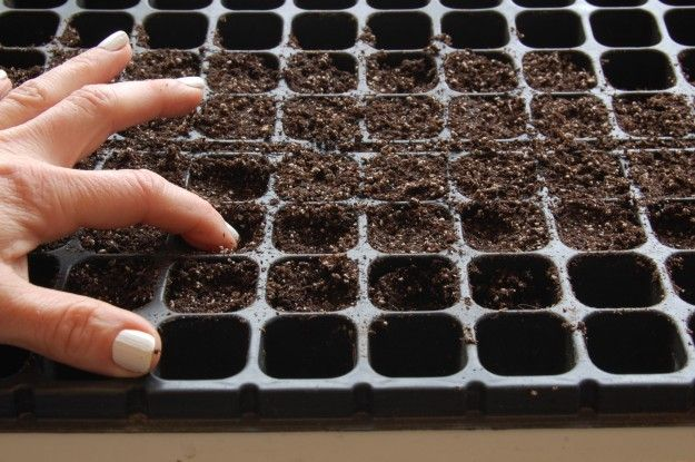 How to grow vegetables from seed (The Art of Doing Stuff)