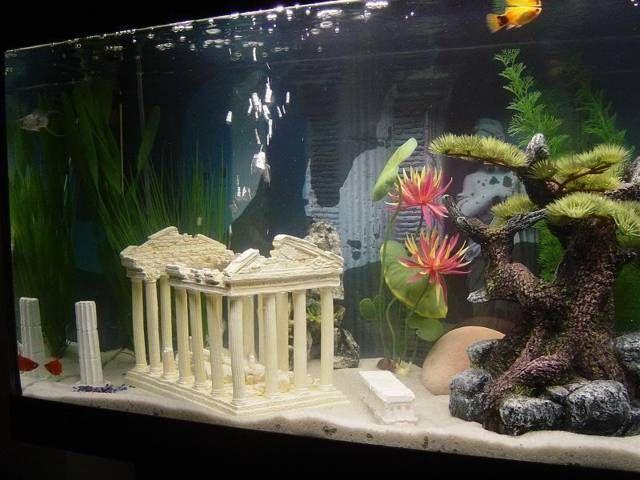 Adornos para acuarios acuario decoracion bajoelmar - Peceras en casa ...