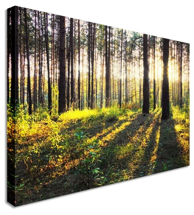 Forest Sun Rays by Landscape Art Canvas Prints Canvas Art Cheap Prints by .  sc 1 st  Pinterest : cheap canvas wall art prints - www.pureclipart.com