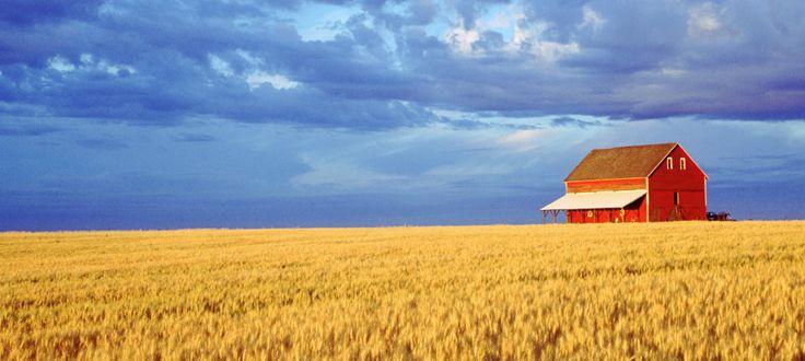 Fincas rústicas, de cultivo, pasto, regadío... los activos que mejor resisten la crisis - Noticias de Vivienda