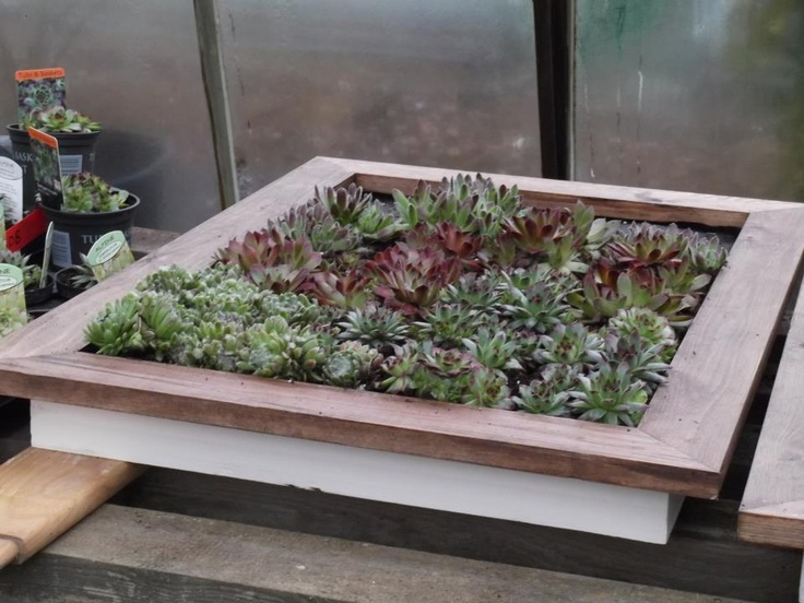 "Completed #mosaic plant picture frame with #Sempervivums, for ""Four Corners"" at the RHS #Hampton Court Flower Show 2013."