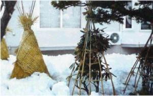 Как укутать деревья на зиму
