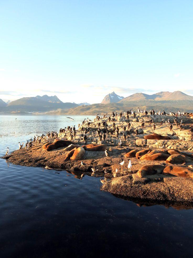 Cohabitation des cormorans et lions de mer à Ushuaia, Argentine