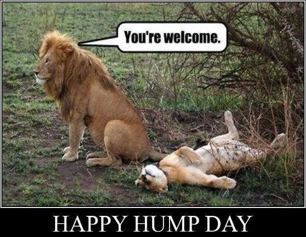 H H H H Happy Humpday peoples - #WalkToSchoolDay #HumpDay #WorkingWednesday