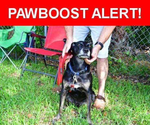 Please spread the word! Huckleberry was last seen in Port Orange, FL 32127.    Nearest Address: Near Orange Ave & Crowell St