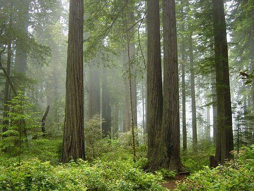 Redwood National Park, California by Michael Schweppe, via Flickr