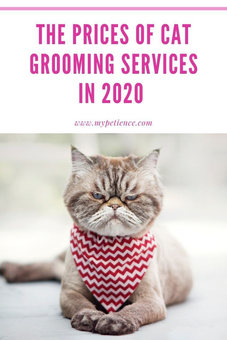 Why Cat Grooming Services Are Essential For Grooming Cat In 2020 Cat Grooming Cat Accessories Pet Cat Groomer
